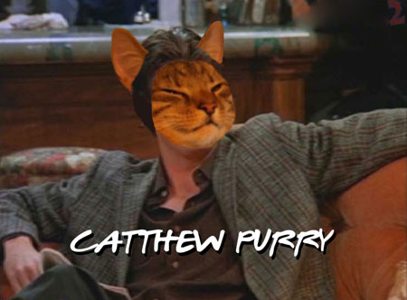 Catthew Purry